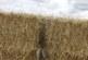 RFEC y Artemisan trasladan a ASAJA las propuestas del sector cinegético para la nueva PAC