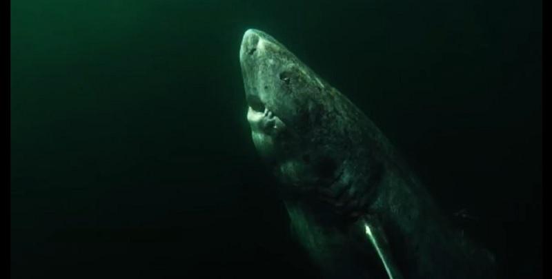 El vertebrado más longevo de la tierra: un tiburón de 515 años nacido en 1505