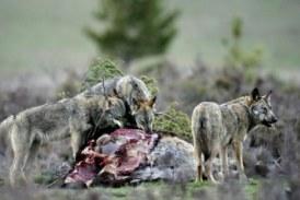 Artemisan presenta soluciones al director general de Biodiversidad para evitar las graves consecuencias de la prohibición de cazar en Parques Nacionales