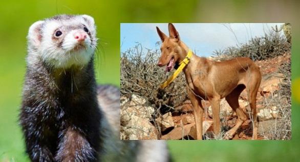 El TC anula cinco puntos de la Ley de Protección de Animales de La Rioja