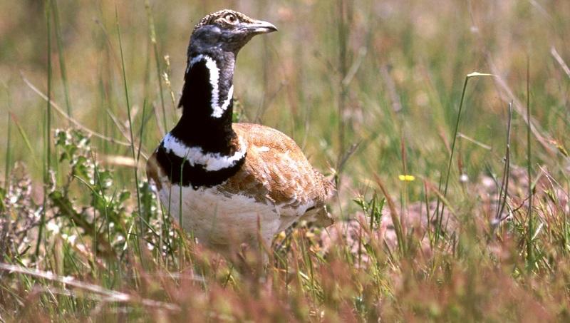 Navarra. Los cazadores lanzan propuestas agrarias en el marco de la PAC para recuperar la fauna menor
