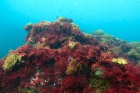 9 de los 14 estuarios y las 4 aguas costeras de la CAPV han alcanzado el buen estado ecológico