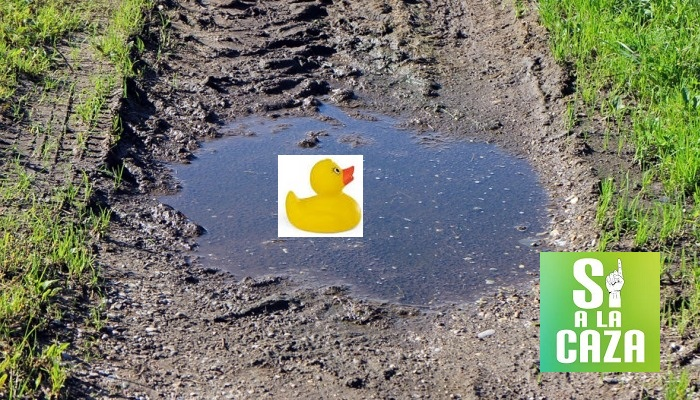 La Comisión Europea confirma que cualquier charco de agua es un humedal