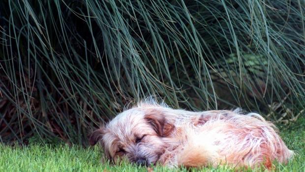 Se dispara el abandono de perros tras el confinamiento ¿Quiénes son los responsables?