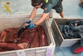 Intervienen en Hondarribia 122 kilos de atún rojo capturado ilegalmente