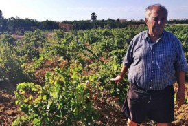 Pierde la cosecha de 1.200 viñas al devorarla los jabalíes