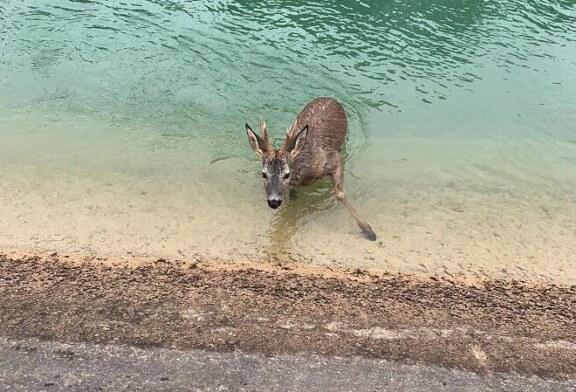 Fundación Artemisan insta a las confederaciones hidrográficas a actuar contra los ahogamientos de animales en canales