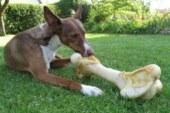 9 alimentos prohibidos para los perros