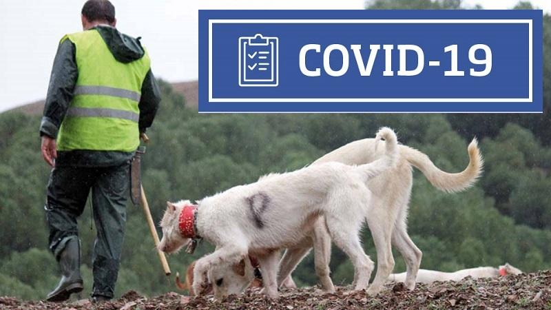 Recomendaciones rehaleros frente al Covid-19