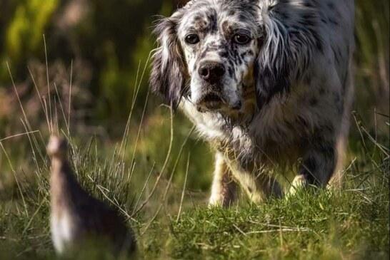 El sector cinegético, satisfecho con la nueva Ley de Bienestar Animal de Castilla-La Mancha