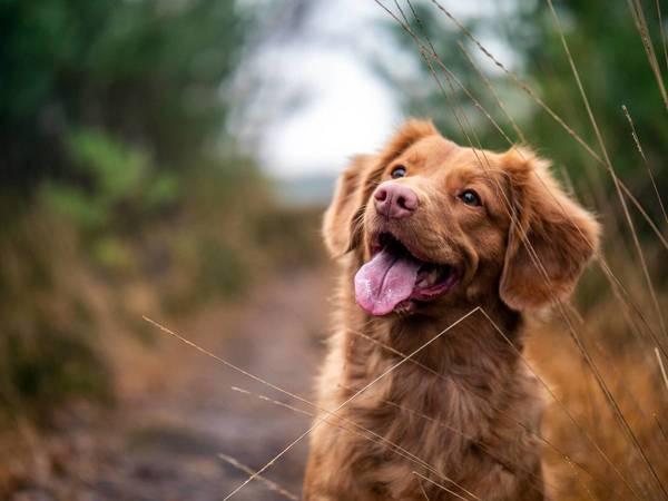 Cinco actos cotidianos que no deberías hacer con tu perro, según los veterinarios
