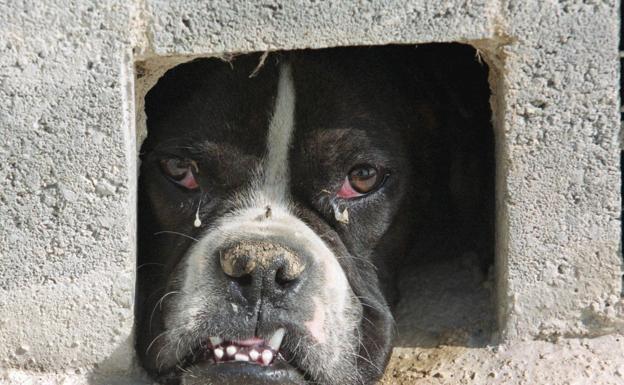 Detenido el administrador de una protectora de Valencia por estafar 700.000 euros de donativos para curar animales