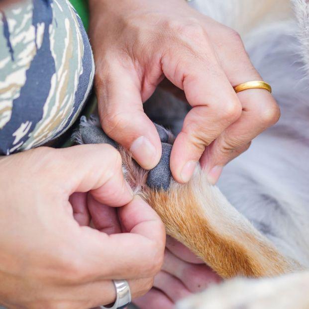 Cómo eliminar las molestas pulgas y garrapatas de tu perro (y de tu casa)