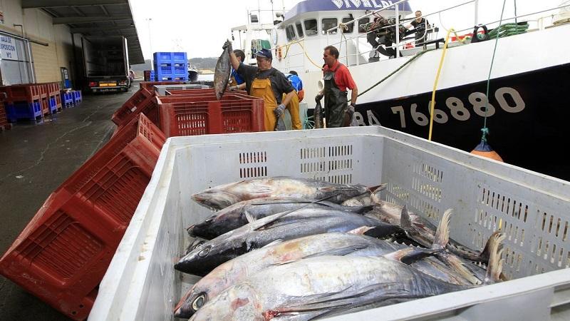 Franceses e irlandeses pescan en el Cantábrico bonito vetado a españoles