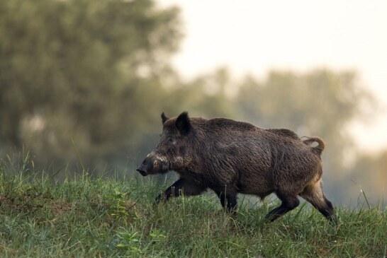 """La RFEC solicita al Ministerio de Agricultura que declare la caza """"actividad esencial"""" en caso de decretarse un nuevo Estado de Alarma"""