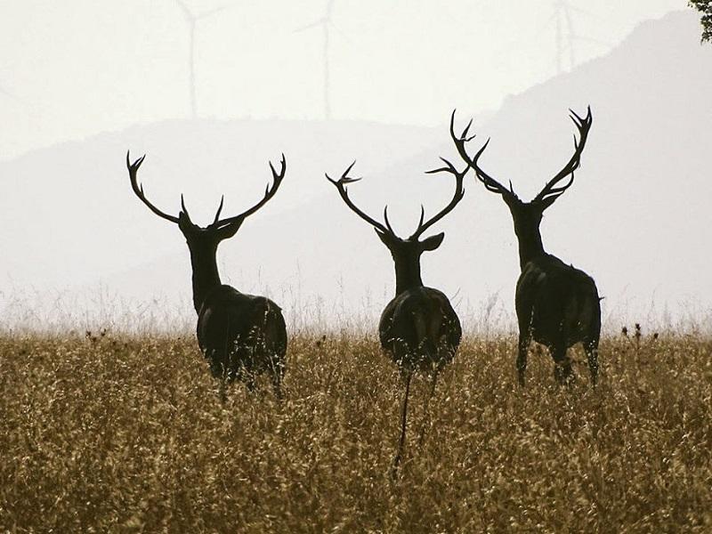 La prohibición de cazar en Parques Nacionales agravará el desempleo y la situación socio económica de los municipios del entorno