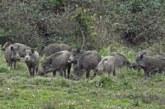 Prohibir la caza en Parques Nacionales podría costar 320 millones de euros en indemnizaciones