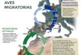 El sector cinegético, al rescate de las aves migratorias