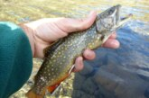 A debate: ¿captura y suelta o pesca responsable?