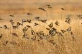La Comisión Europea abre una vía al silvestrismo