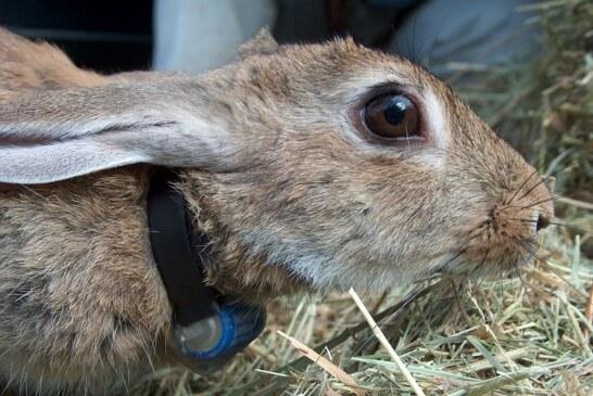 La caza es parte de la solución de la biodiversidad
