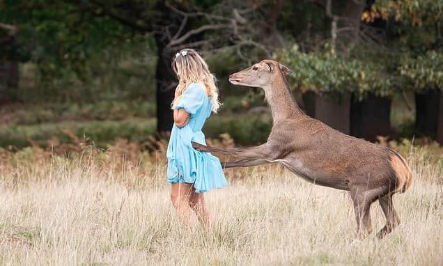 'No somos Bambi': un ciervo patea a una joven en un parque de Londres