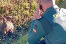 INCREIBE! Rescatado un jabalí herido en Navarra