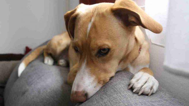 Imperdible: cómo salvar a tu perro si es envenenado