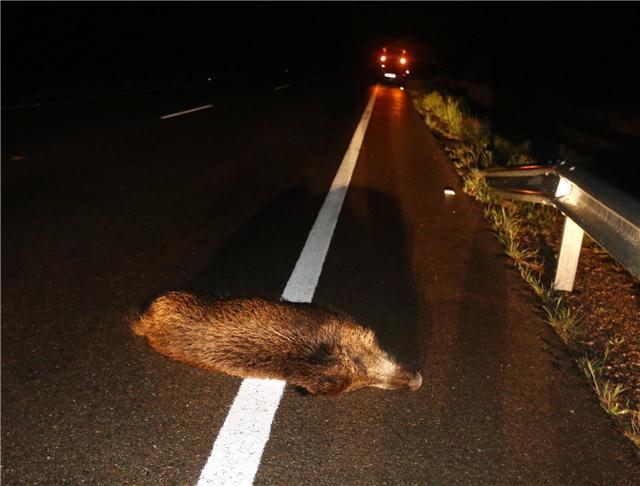 Aumento de accidentes de tráfico con animales de caza