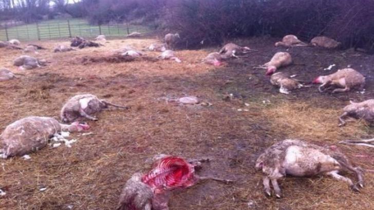 Ahora, cuando quieran carne, que cojan la del lobo y que se la coman