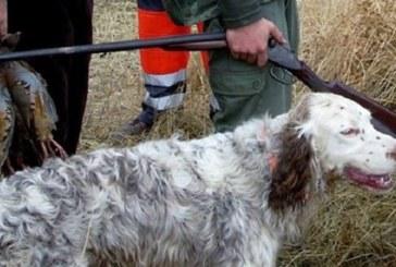 Castilla y León pide que el Gobierno de España reconozca la caza como «necesaria»