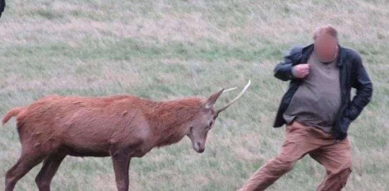 Ignoró los carteles de advertencia, se acercó a un ciervo salvaje y el animal se defendió