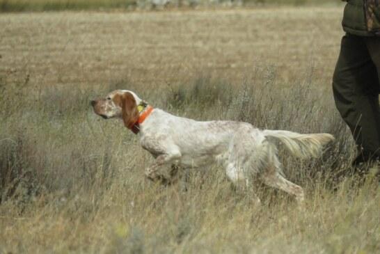 La Embajada de España en Lituania defiende a un cazador federado acosado por animalistas en este país, tras la petición de la RFEC