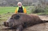 Gran jabalí de 150 kilos cazado en Tierra Estella