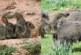 Fundación Artemisan advierte de que las consecuencias de una nueva paralización en la caza pueden ser devastadoras