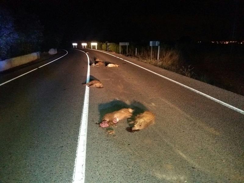 Los animales provocan 9.772 accidentes y causan dos muertes en Castilla y León