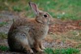 Resurgen los conejos