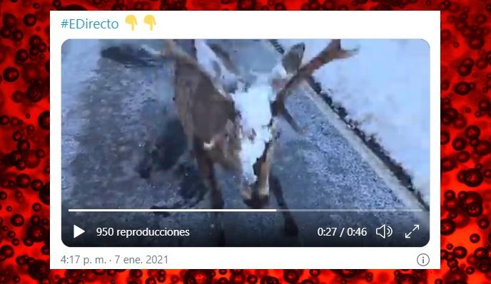 VÍDEO/ Un venado embiste al reportero de 'España Directo'