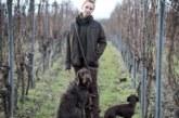 Cazadores alemanes en busca de carne «ética»