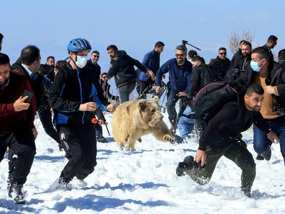 Vídeo. Liberan a un grupo de osos en Irak y se vuelven contra la multitud que lo presenciaba