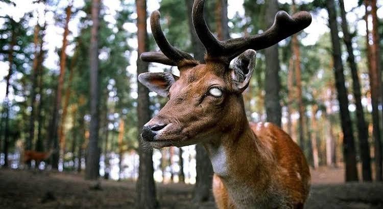Virus del ciervo zombie, descubre por qué podría poner en riesgo a la humanidad