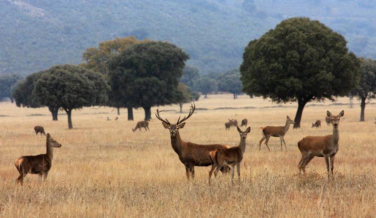 ¿Cómo controlamos la sobreabundancia de ciertas especies de fauna silvestre en los parques nacionales?
