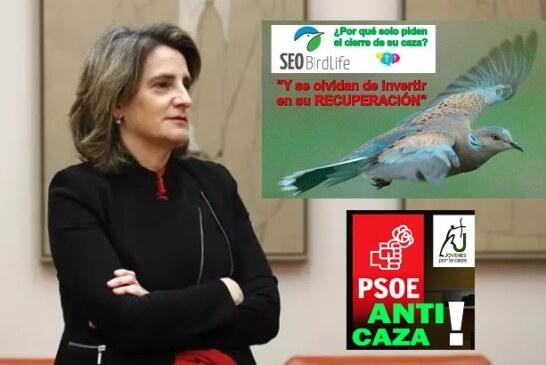 Teresa Ribera, jaque mate a la tórtola… y al PSOE