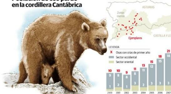 Asturias logra sacar al oso de la extinción
