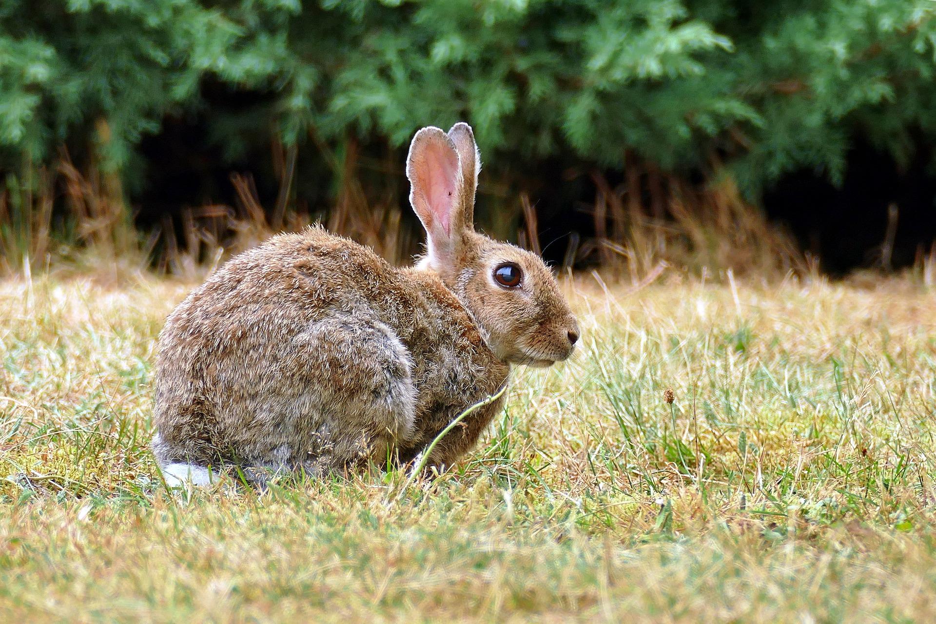 ¿Sabes cómo varían las garrapatas en los conejos de monte a lo largo del año?