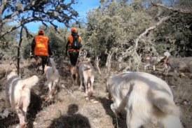 ARRECAL reclama mejorar la regulación rehala y la montería en el reglamento de caza de Castilla-La Mancha