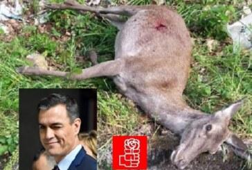 """Fundación Artemisan y RFEC denunciarán ante la Fiscalía General del Estado la """"matanza"""" de 40 animales en Monfragüe"""