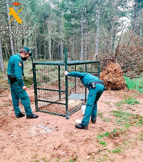 Investigado por colocar una jaula trampa para la caza mayor