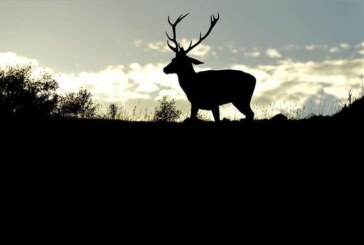 La matanza en el Parque Nacional de Monfragüe llega a la Fiscalía General de Medio Ambiente