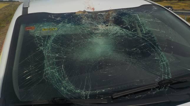 Policía Foral atiende cinco accidentes con animales en un día